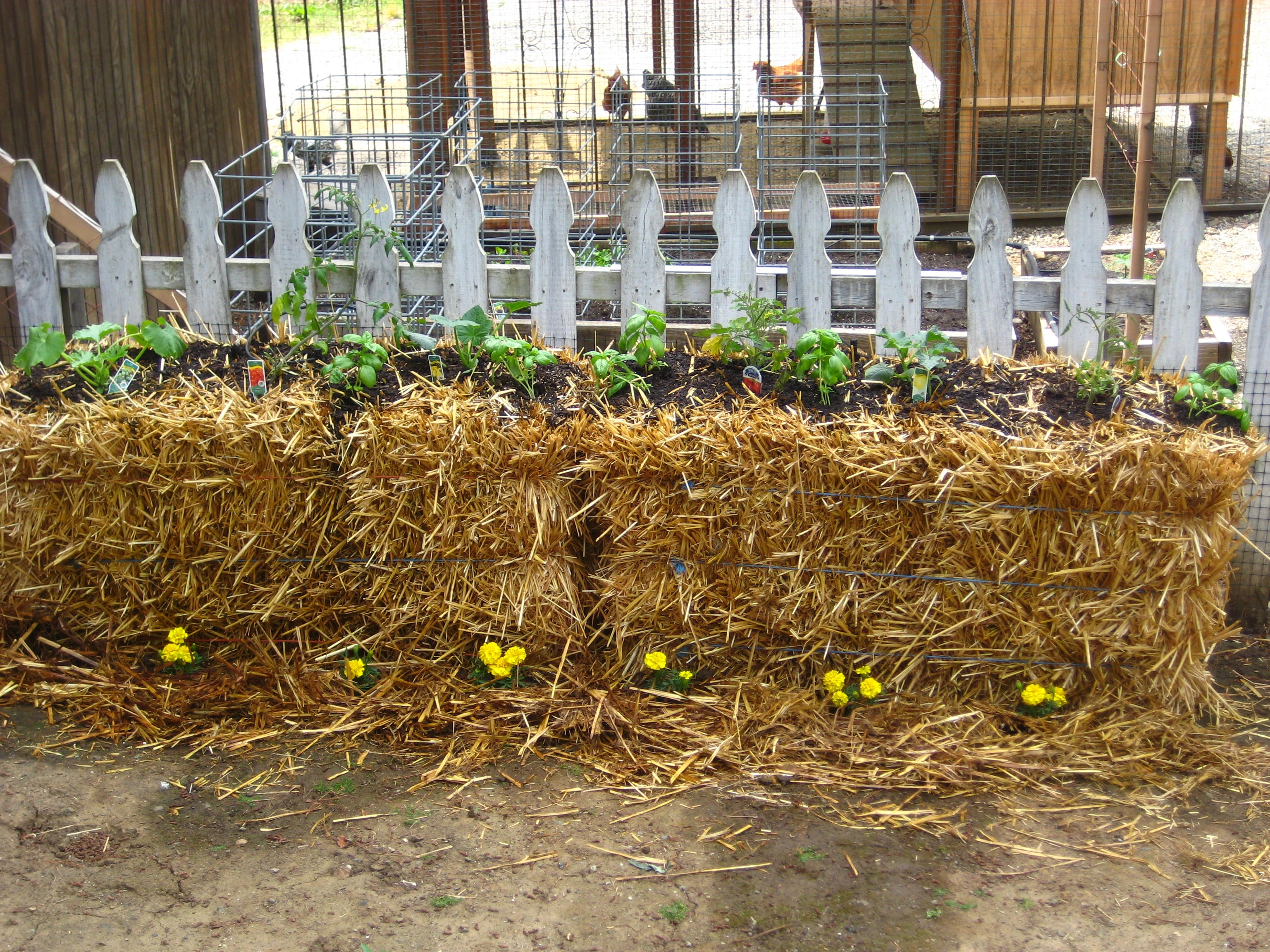 growing plants in hay bales Place bales with stems upright and vertical, so cords don't touch the ...