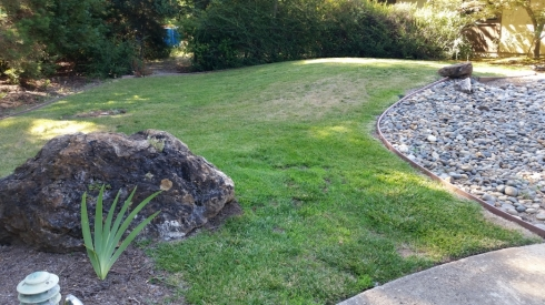 We mowed this lawn short and gave it a good, deep soak before we began the sheet mulch progress.